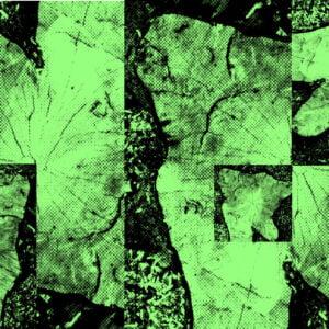 Zielone zdjęcia pnia drzewa.