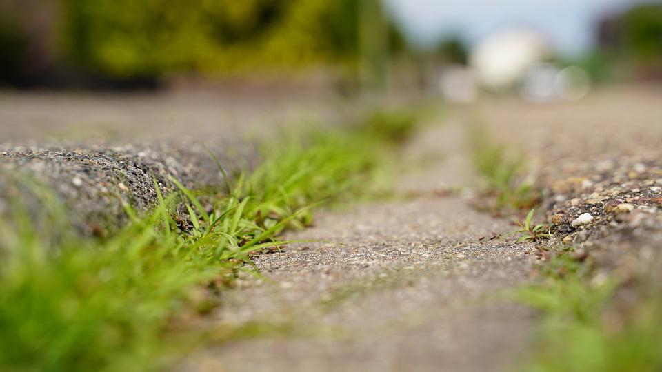 Zdjęcie ścieżki porośniętej trawą.