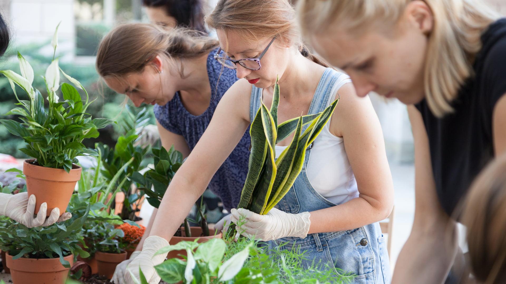 Warsztat ogrodniczy